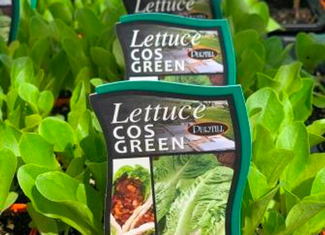 Lettuce - Cos Green punnet