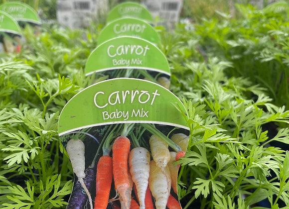 Carrot - Baby Mix punnet