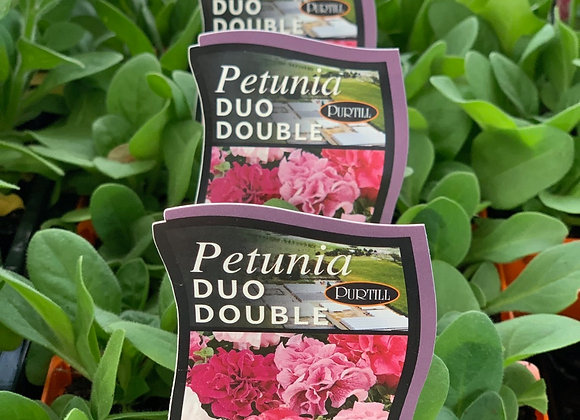 Petunia - Duo Double punnet