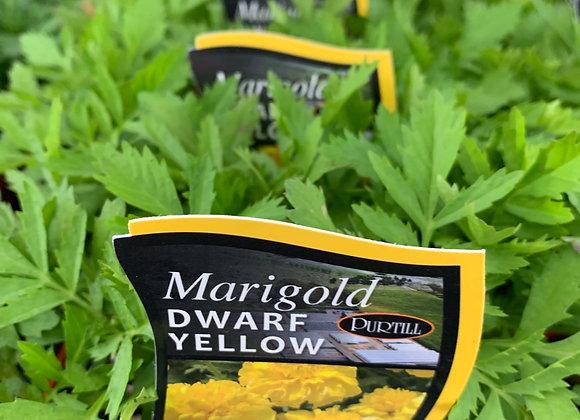 Marigold - Dwarf Yellow