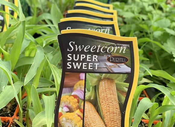 Corn Super Sweet punnet