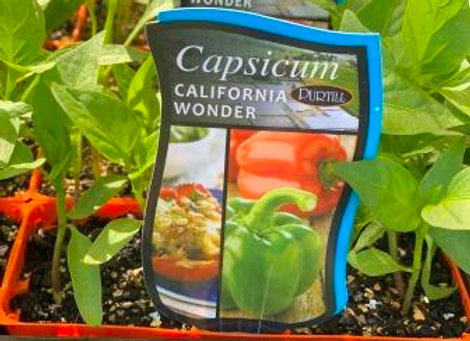 Capsicum - California Wonder punnet