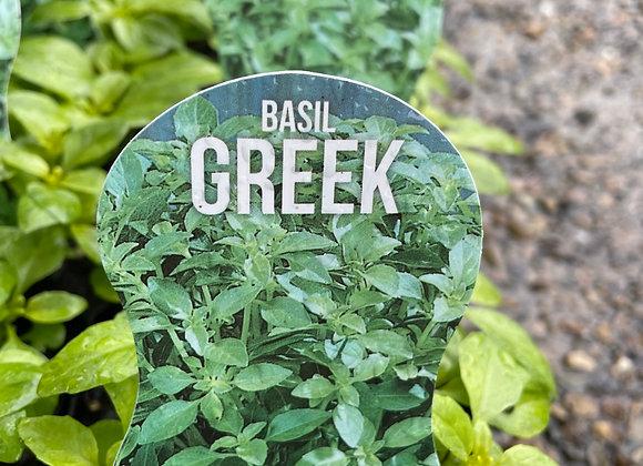 Basil Greek- 100mm square pot SEMI ADVANCED