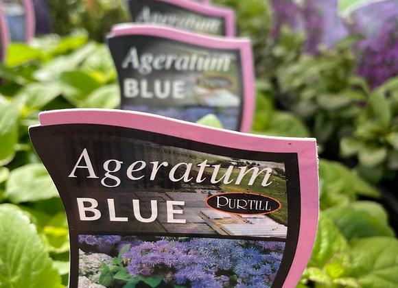Ageratum - Blue