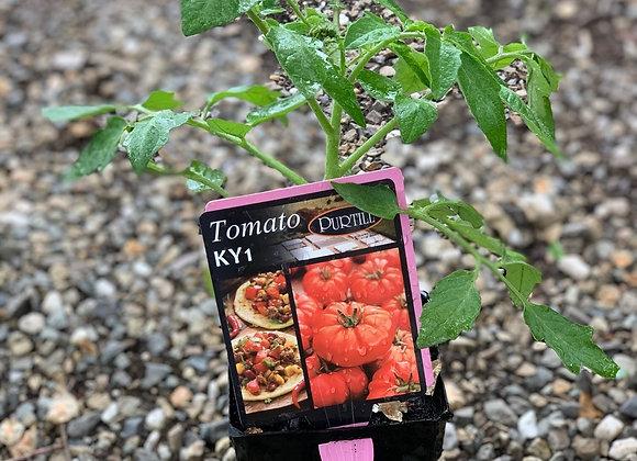 Tomato - KY1 ADVANCED