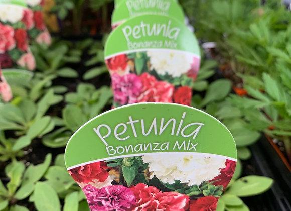 Petunia - Bonanza Mix  punnet