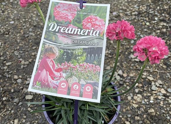 Dreameria - Dreamland