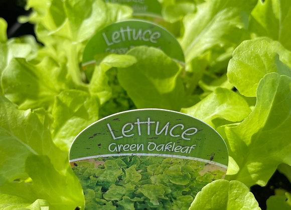 Lettuce - Green Oakleaf punnet