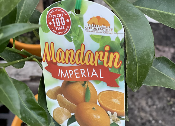 Mandarin - Imperial