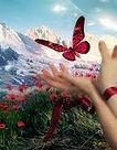 borboleta livre.jpg