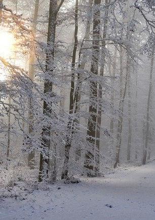 snow-4668099_640.jpg