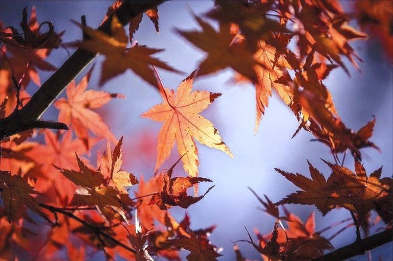 autumn-leaves-1415541_640_edited.jpg