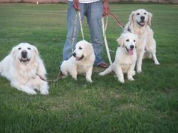 Hiromi dogs