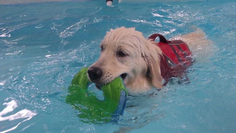 Woodrow fun swim May 3 2015