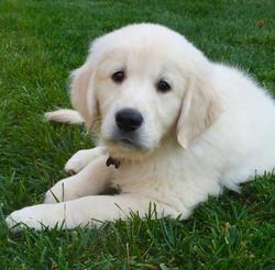 Winston 9 weeks
