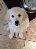 Charlie says hi!