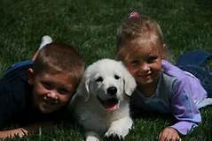 Baumer kids and puppy