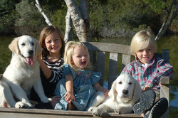 Cox puppies