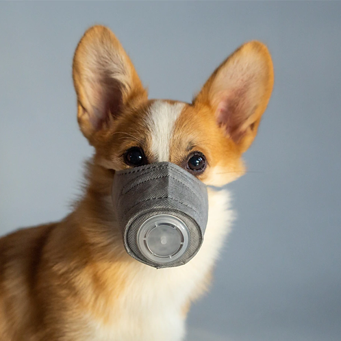 Pet Respiratory Filtered Mask for Dogs