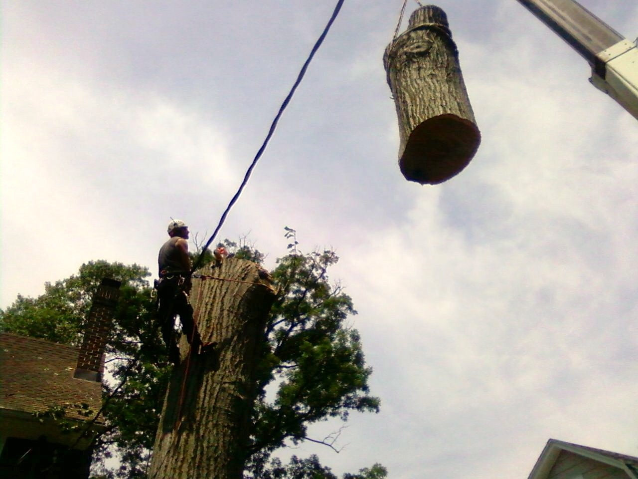Tree Removal in Middlesex county.