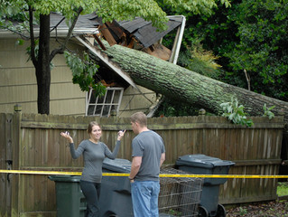 If a tree falls on my property, who's responsible?