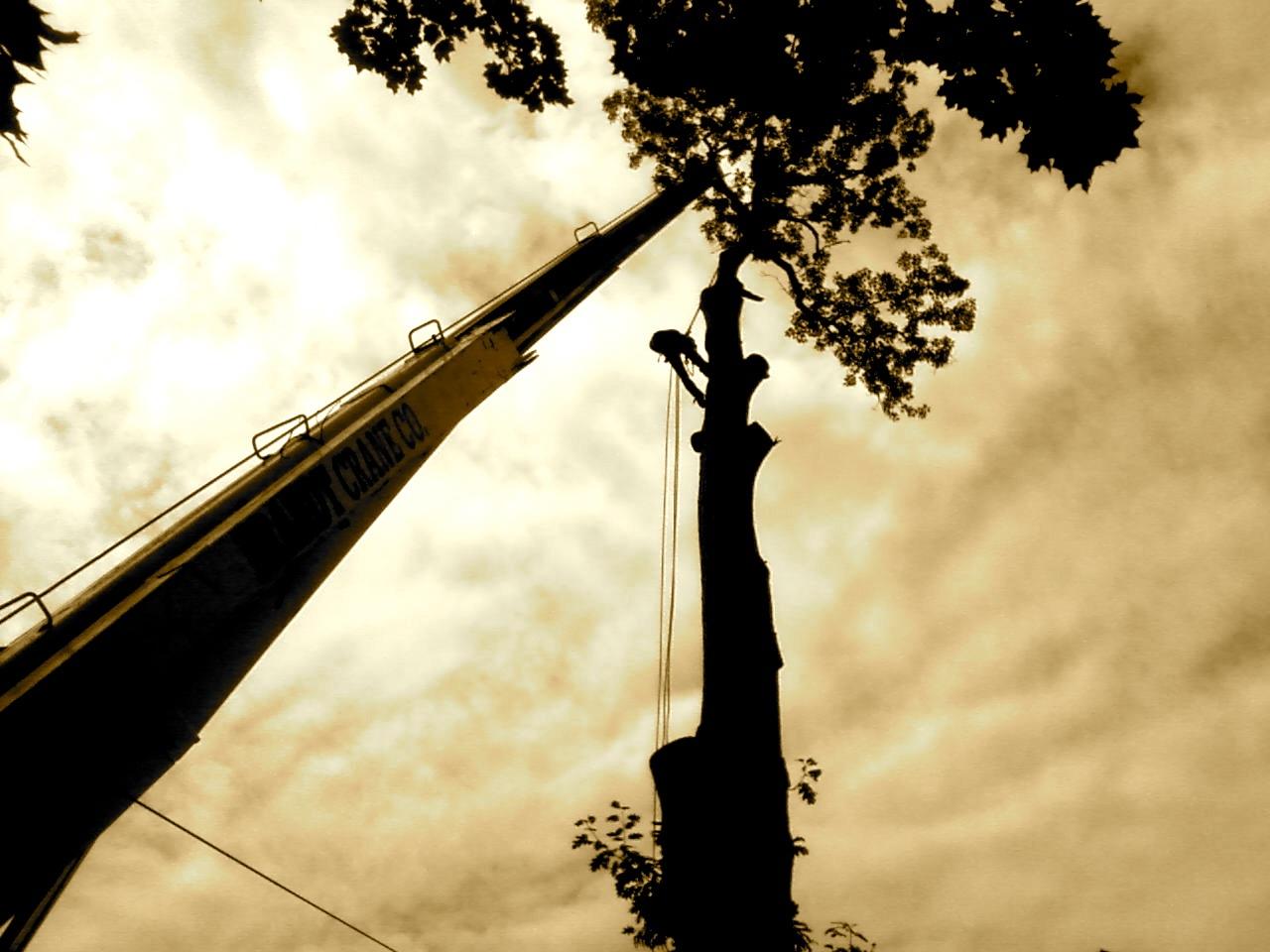 Tree Service NJ