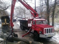 Tree Removal in Westfield NJ