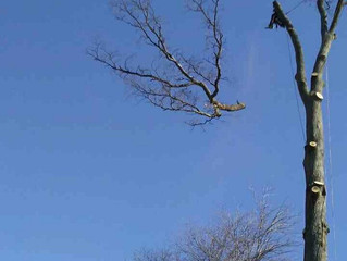 The Average Cost of Tree Removal