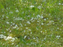 Hail Storm May 2008