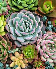 cultivar-cactus-suculentas-1-a.jpg