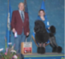 Ceili placesat dog show