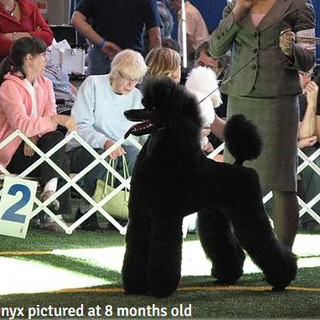Onyx at yet another dog show
