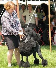 Onyx at dog show