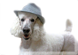 COLE  WITH HAT