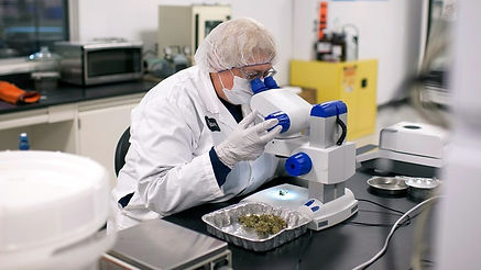 medical-marijuana-research-gop-182780c7-