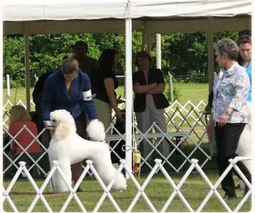 show dog 12-1.JPG