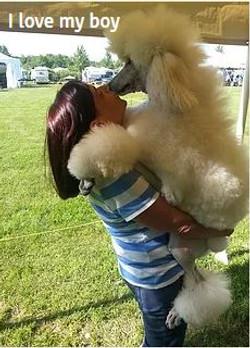 show dog 29