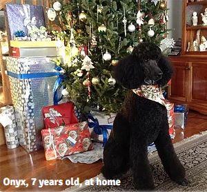 Onyx at Christmas