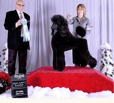 Onyx show dog poodle