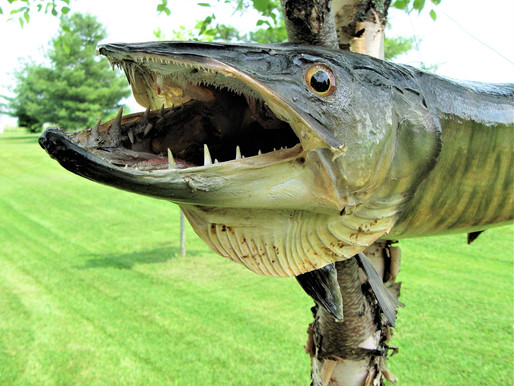 Muskie Lures - An Angler's Must-Have