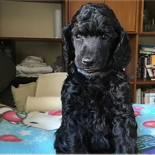 Cole jr as a puppy