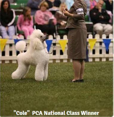 cole pca national winner.JPG