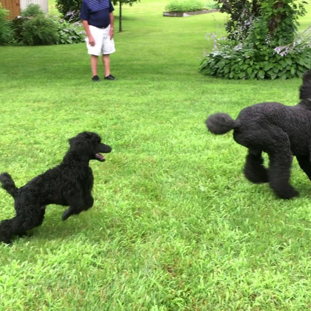 Ormar puppy 2017 & Sire
