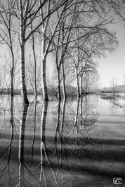 alberi BW.jpg