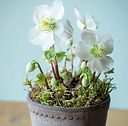 Dried and floral potted plant