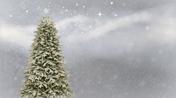 Pre-Book your Christmas Tree