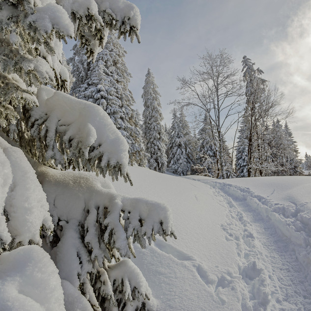 Jura Winter