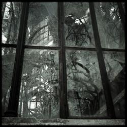 arbores-virides-sunt