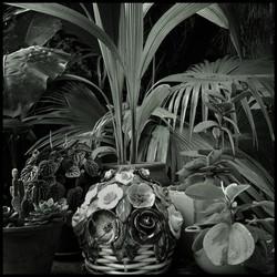 Plantae-crescunt