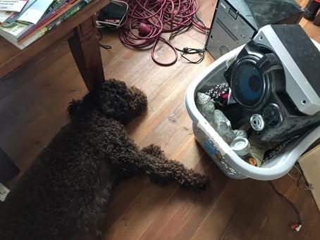 Pool im Keller für den Wasserhund